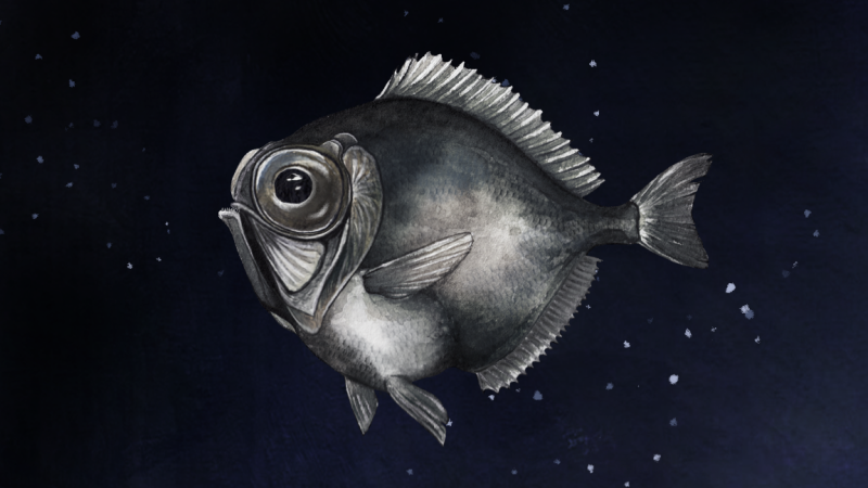 Deep-sea fishes have super vision to see and interpret light in low light conditions