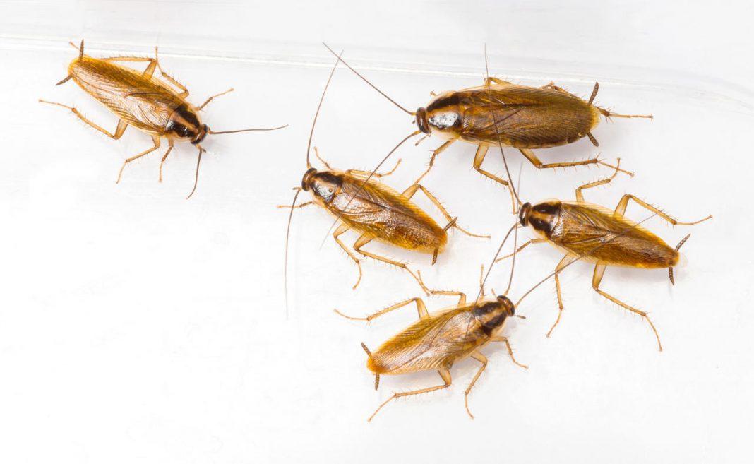 Evolving cockroaches